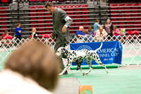 Dogshow 2017-04-08 KC of Yorkville--162449-3