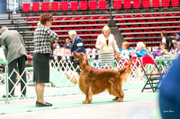 Dogshow 2017-04-08 KC of Yorkville--153638
