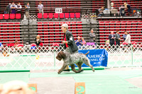 Dogshow 2017-04-08 KC of Yorkville--153501-2
