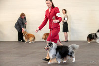 Dogshow 2018-03-04 CSSC Day 2 Candids--134846-3