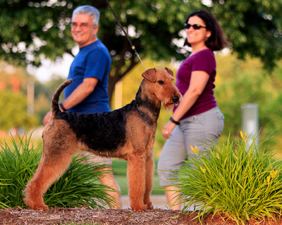 Photo Shoot 2016-06-17 Gracie Airedale--200417