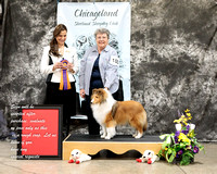 Dogshow 2017-03-05 Sheltie Win Photos--130055