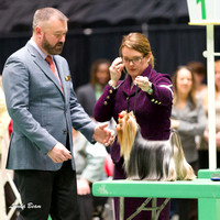 Dogshow 2017-04-08 KC of Yorkville--151913