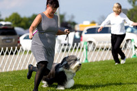 Dogshow 2017-08-01 Burlington WI KC D2--093957