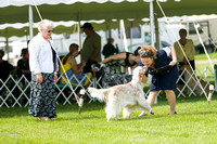 Dogshow 2017-06-04 untitled shoot--102107-2