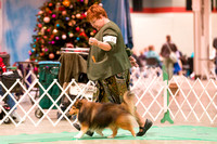 Dogshow 2017-12-09 Skokie Valley KC--153557-3