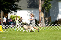 Dogshow 2017-08-01 Burlington WI KC D2--100500