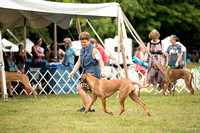 Dogshow 2016-08-13 Oak Creek--101458
