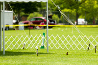 Dogshow 2017-06-04 untitled shoot--132649