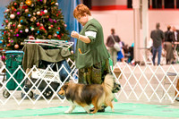 Dogshow 2017-12-09 Skokie Valley KC--153556