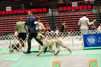 Dogshow 2017-04-08 KC of Yorkville--145056-3