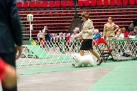 Dogshow 2017-04-08 KC of Yorkville--162359-3