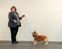 Dogshow 2018-03-04 CSSC Day 2 Candids--140213