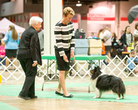 Dogshow 2017-12-09 Skokie Valley KC--153442