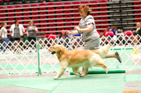 Dogshow 2017-04-08 KC of Yorkville--153830-4