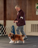 Dogshow 2018-04-07 Interlocking SSC--093506-3