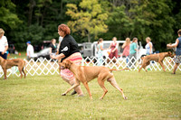 Dogshow 2016-08-13 Oak Creek--101536-2