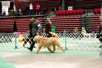 Dogshow 2017-04-08 KC of Yorkville--145132