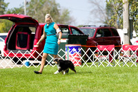 Dogshow 2017-08-01 Burlington WI KC D2--101059