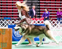 Dogshow 2017-04-08 KC of Yorkville--174100-4